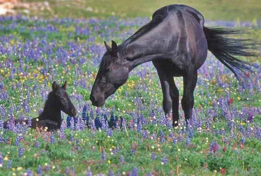 Wild Mustang Tours - Multiple Locations