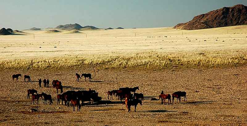 The Namib, Namibia