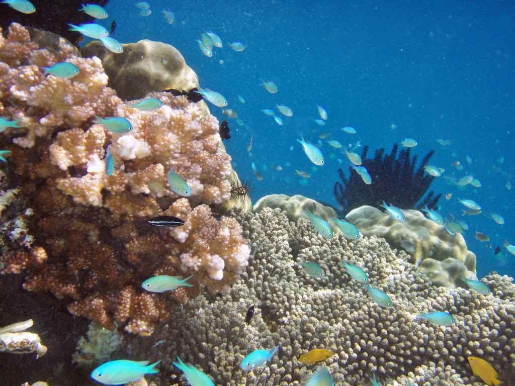 Raja Ampat Islands, West Papau