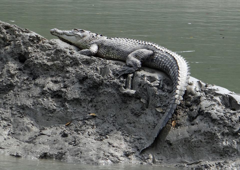 4. Sea Crocodile (Indo-Pacific)
