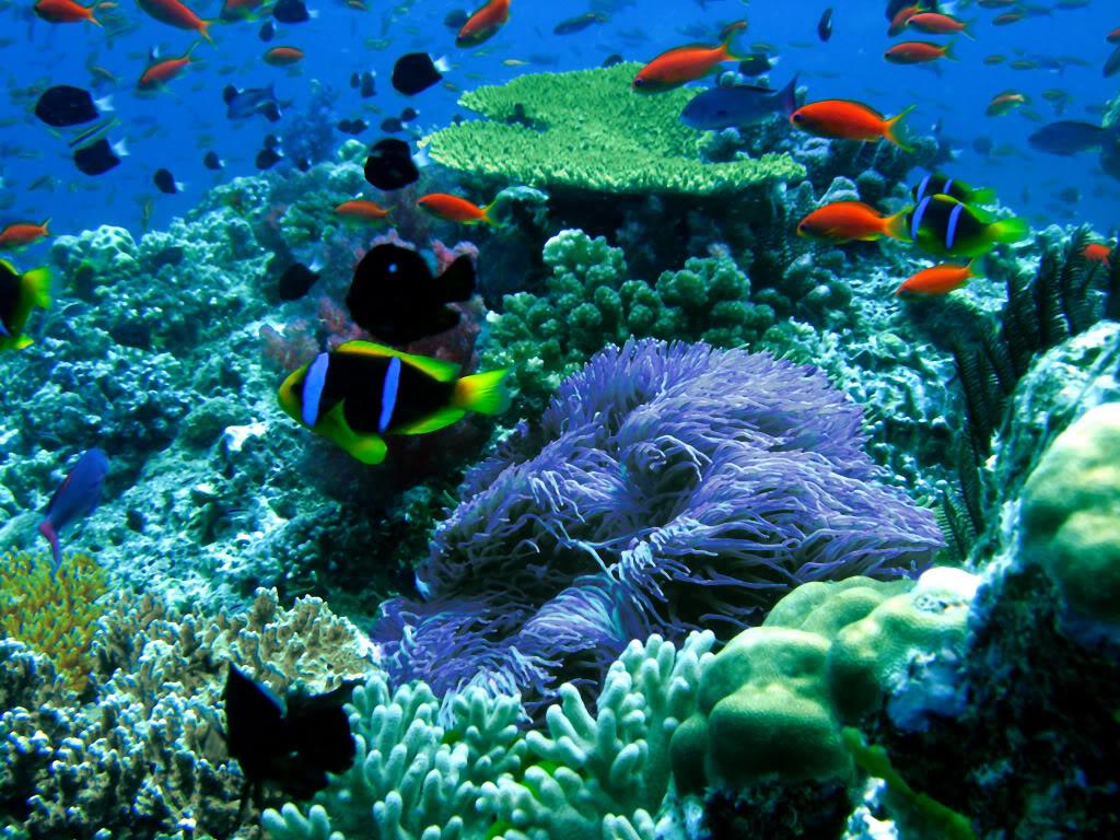 1. Sun Flower Reef, Fiji