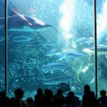 1. Two Oceans Aquarium, South Africa
