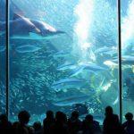 1. Two Oceans Aquarium, South Africa