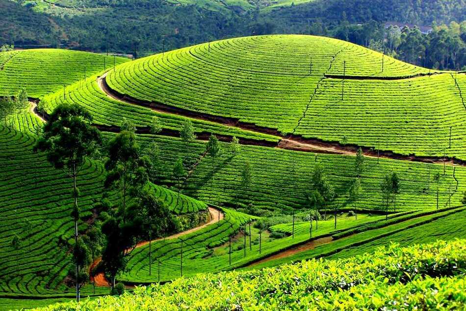 10. Kolukkumalai - India