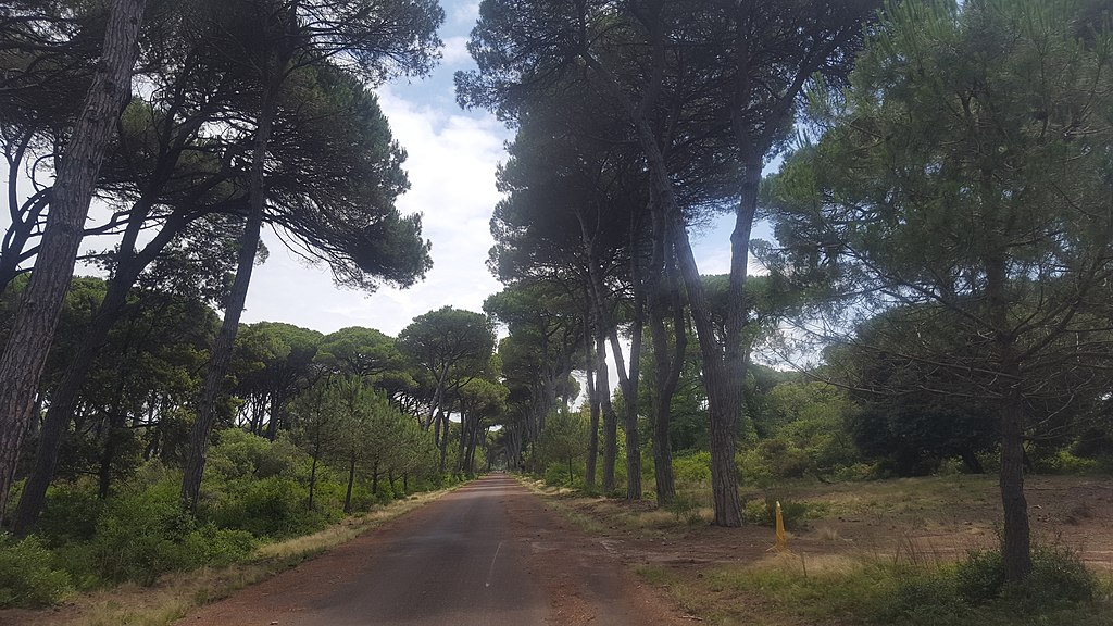 10. The Wood in the Migliarino Natural Park