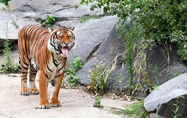 10. Tierpark Berlin - 160 hectares