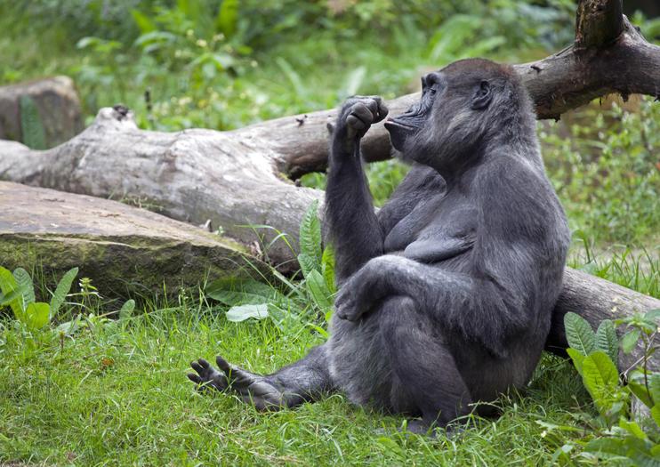 11. Bronx Zoo - 107 hectares