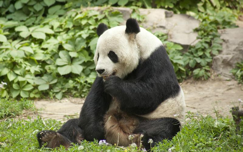 12. Beijing Zoo - 89 hectares