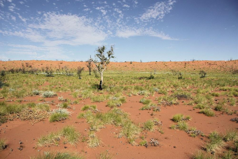 12. Great Sandy Desert - 360.000 km²