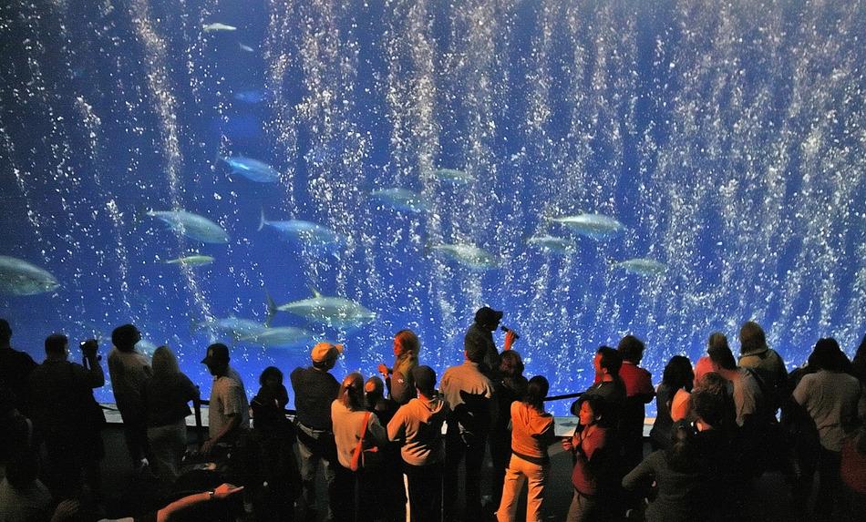 12. Monterey Bay Aquarium, USA