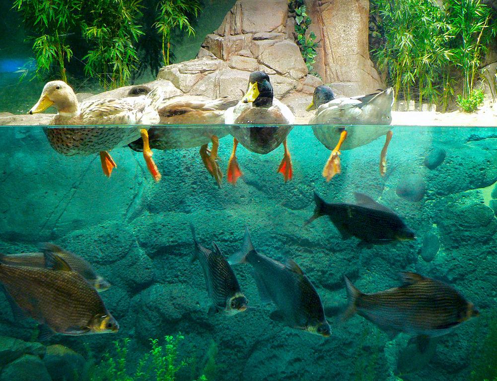 13. Shanghai Ocean Aquarium, China