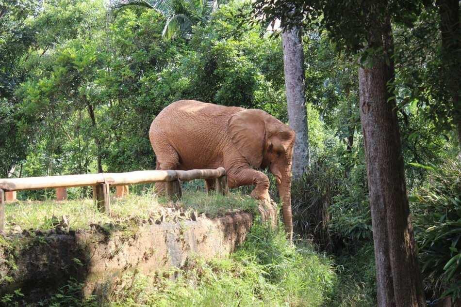14. Sao Paulo Zoo - 82 hectares