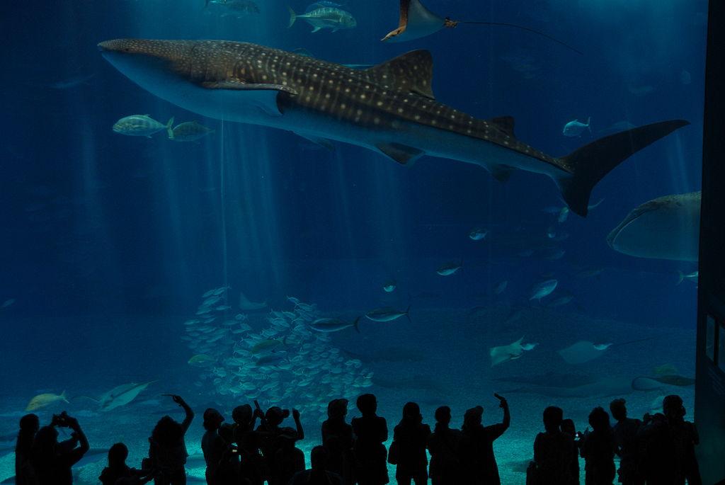 15. Okinawa Churaumi Aquarium, Japan