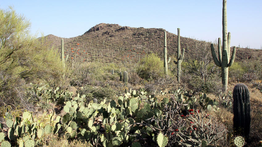 15. Sonoran Desert - 310.800 km²