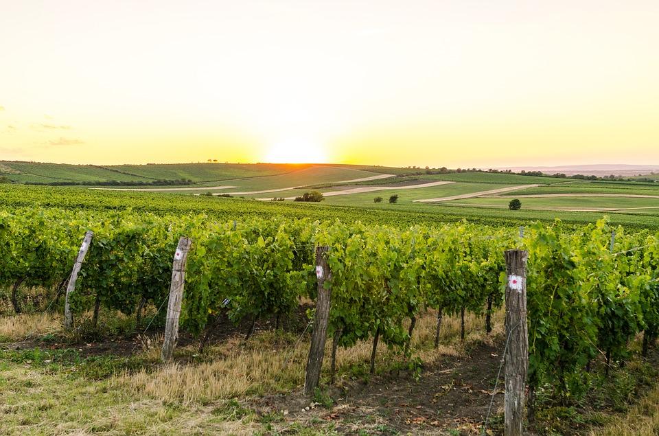 15. The Fields of Moravia - Czech Republic
