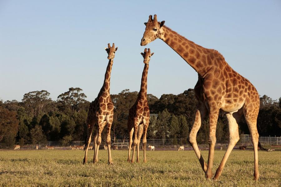 2. Taronga Western Plains Zoo - 300 hectares