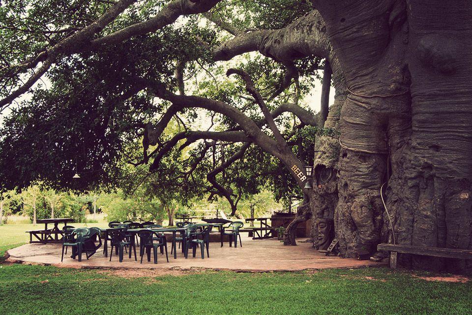 3. Baobab Tree Bar, Modjadjiskloof, South Africa