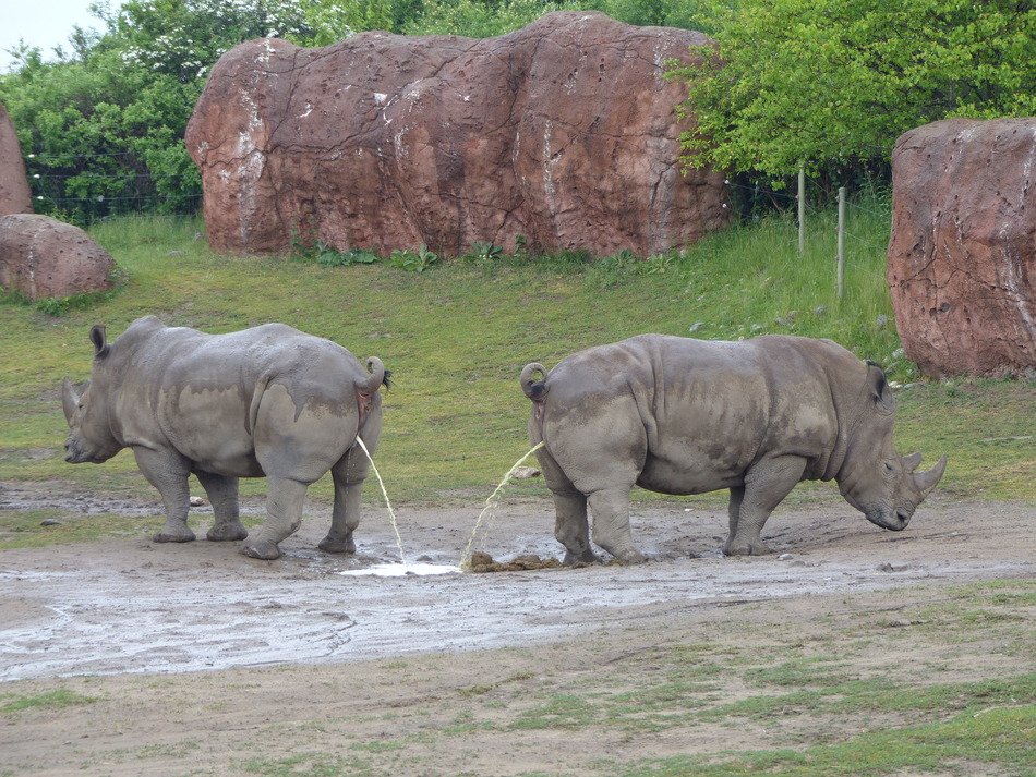 3. Toronto Zoo - 287 hectares