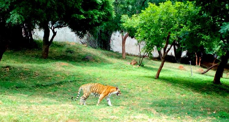 4. Indira Gandhi Zoological Park - 253 hectares