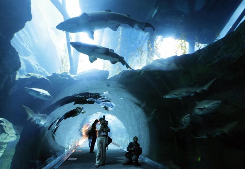 5. Dubai Aquarium and Discovery Center, United Arab Emirate