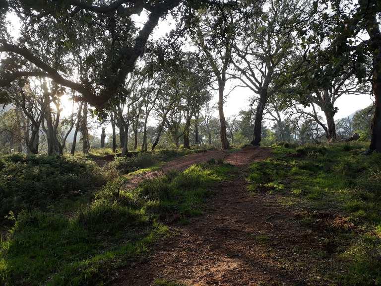 6. San Vito Cork Oak Wood