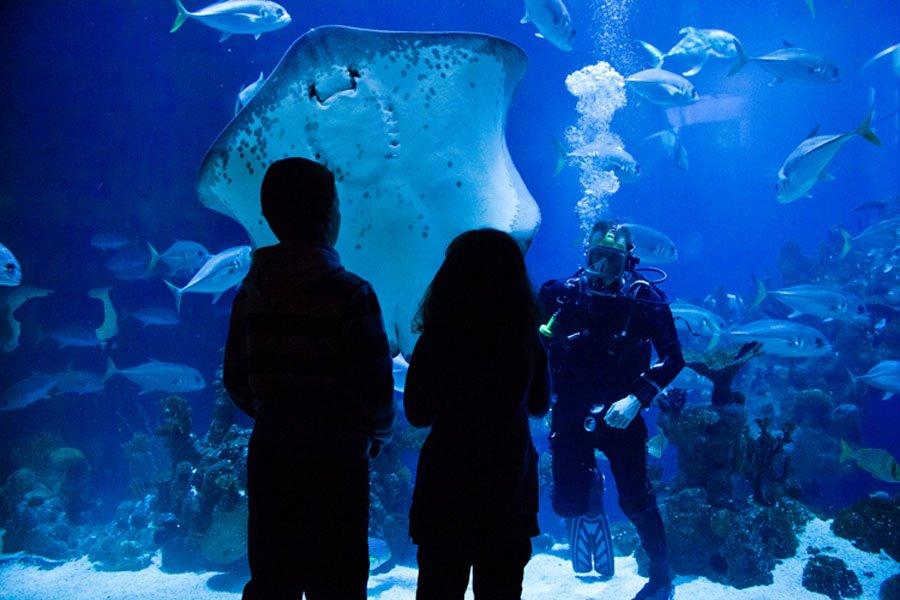 6. The Deep Aquarium, Great Britain