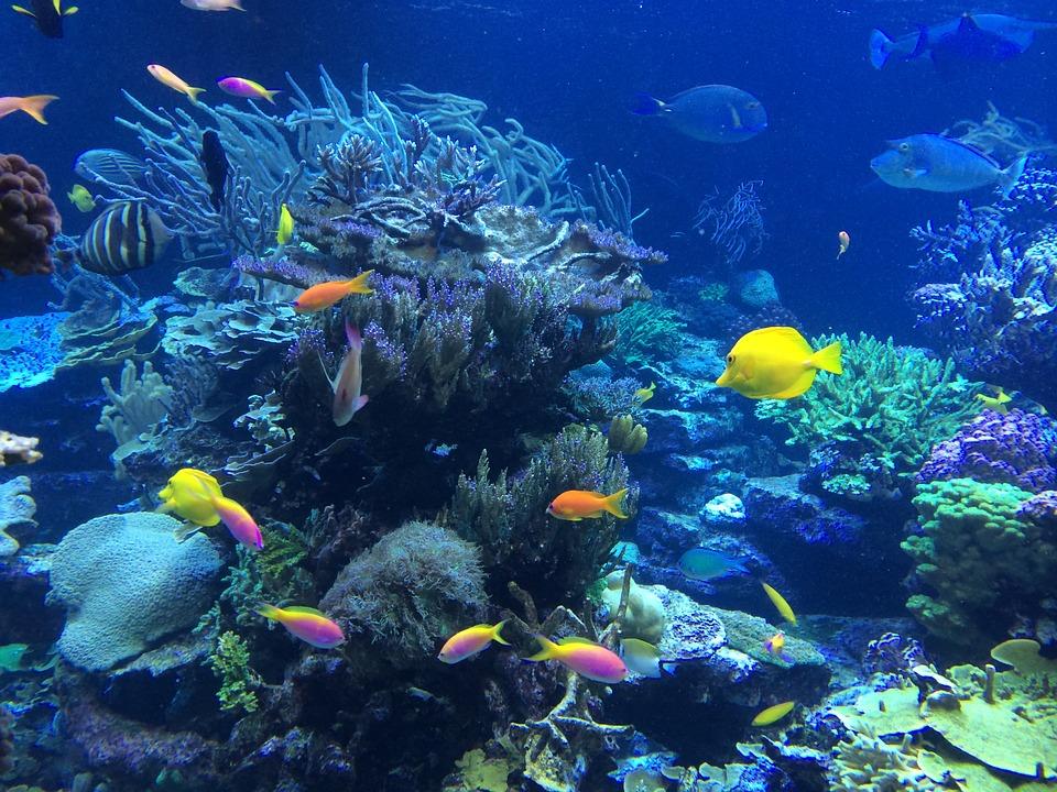 7. Cane Bay, Virgin Islands