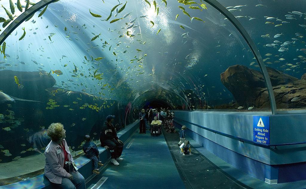 7. Georgia Aquarium, USA