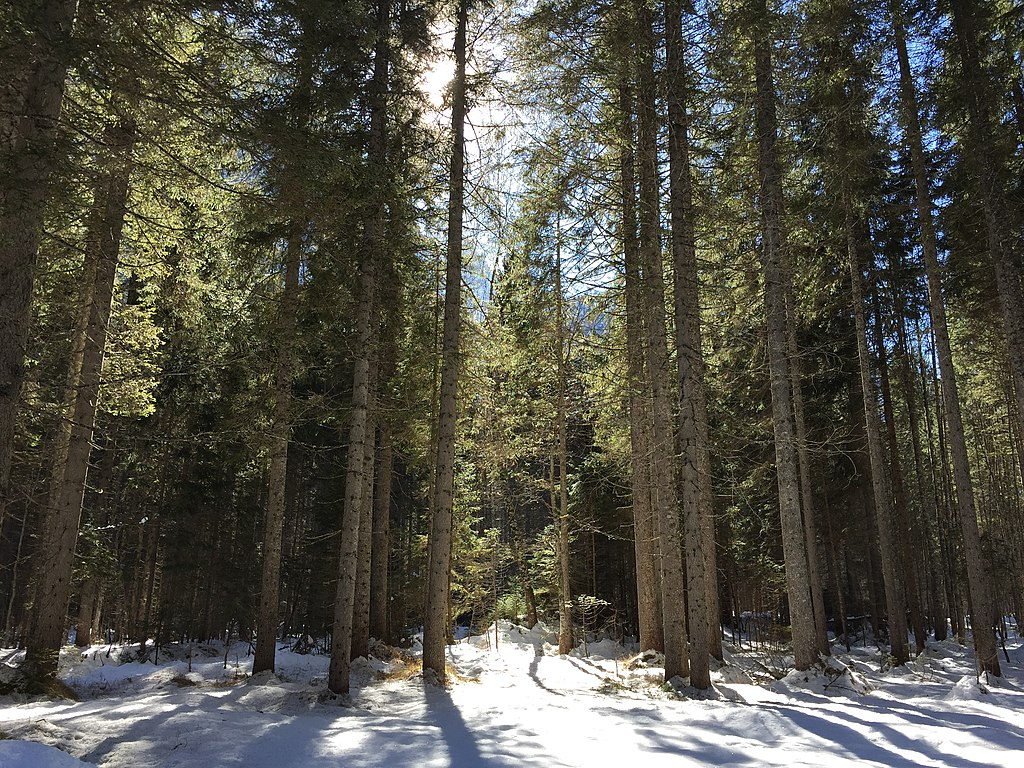7. Somadida Forest