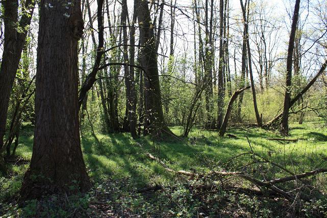 9. Quarto Wood (Bosco Quarto)