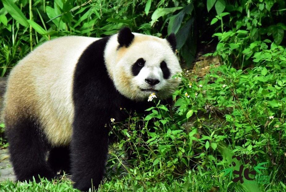 9. Taipei Zoo - 165 hectares