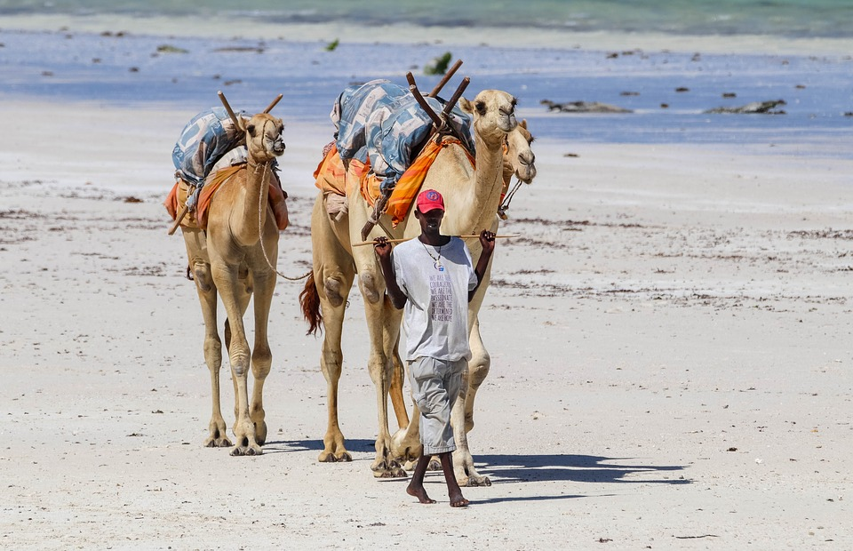 How much money will you need for a trip to Kenya