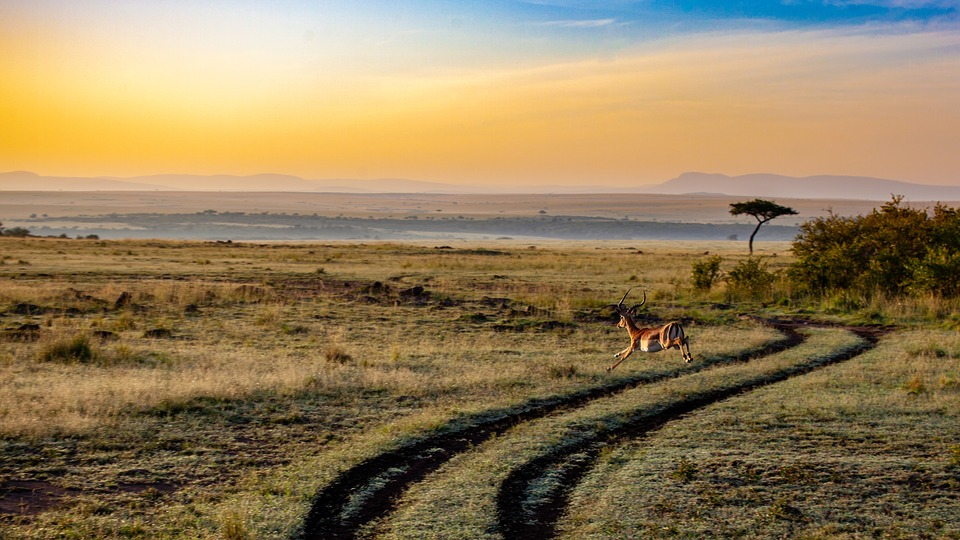 When is the best time to go to Kenya