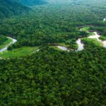 1. Amazon Rainforest