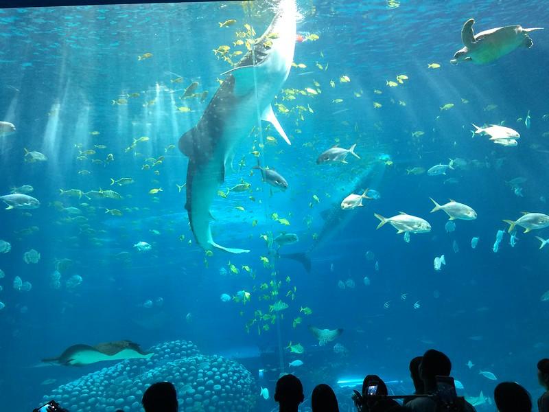 1. Chimelong Ocean Kingdom