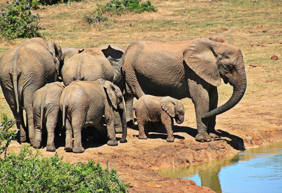 1. Kruger National Park, South Africa