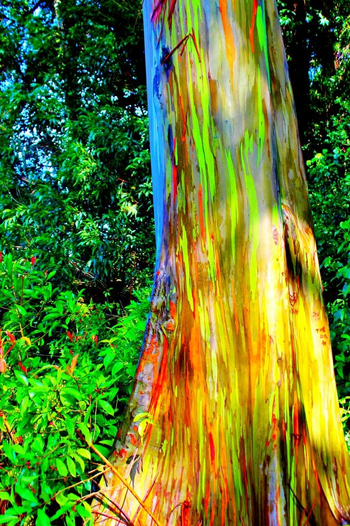 1. The Painted Forest, Maui, Hawaii, USA