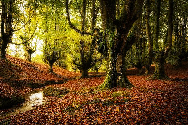 10. Otzarreta Forest, Spain