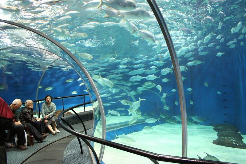 11. Ocean Aquarium