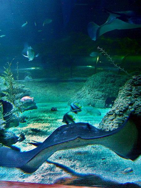 13. Aquarium of Western Australia