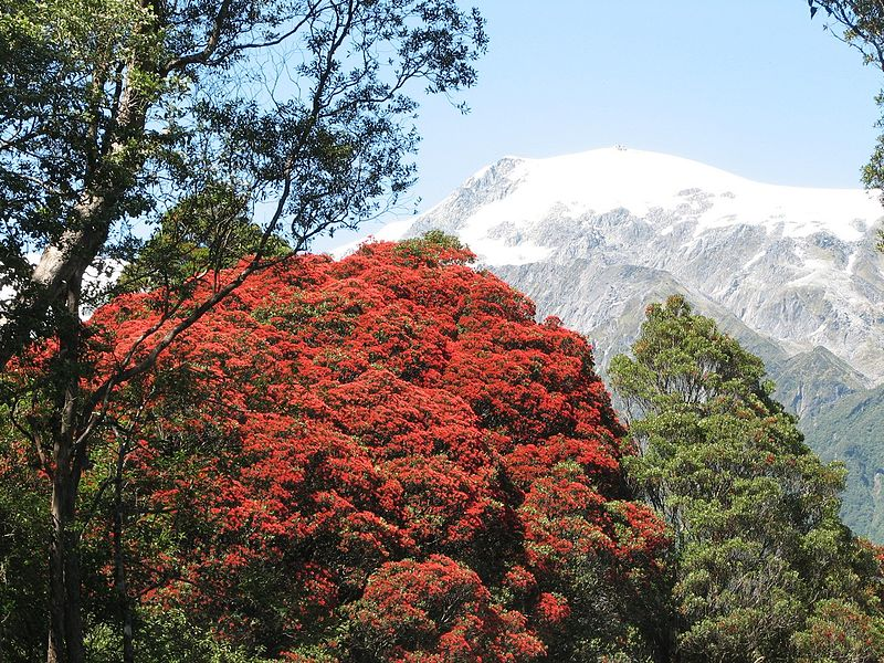 13. Rata Forest, New Zealand