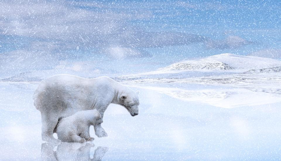 2. Arctic - 13,700,000 km2