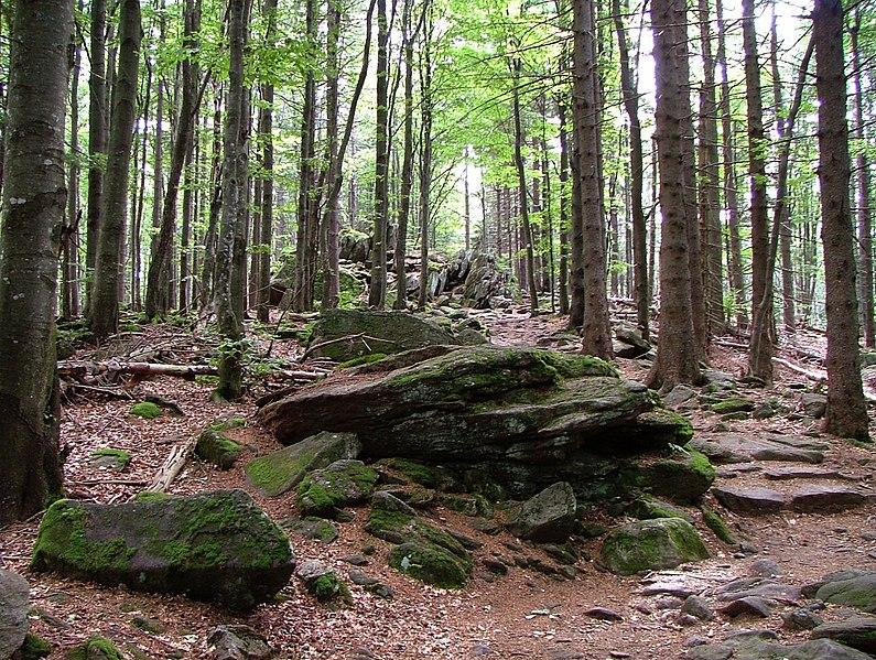 2. Bavarian Forest National Park, Germany
