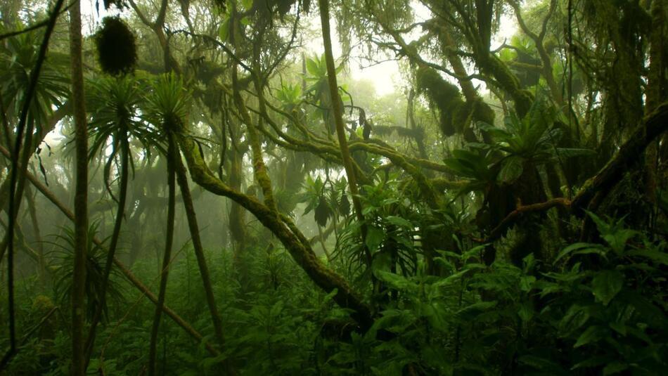 2. Congo Rainforest