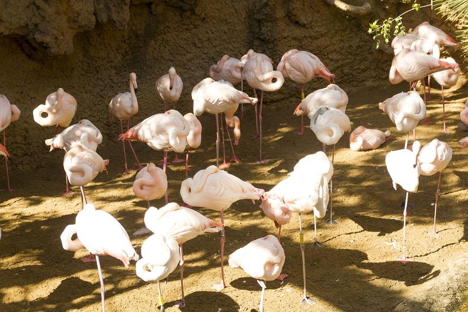 2. Falconara Zoo Park, Marche