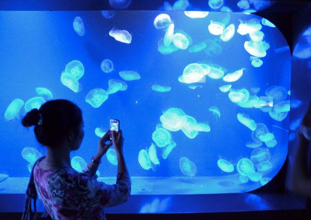 2. SEA Aquarium