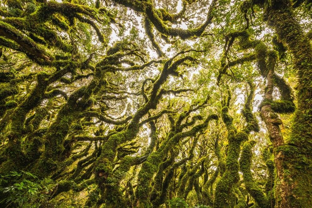 3. Goblin Forest, New Zealand