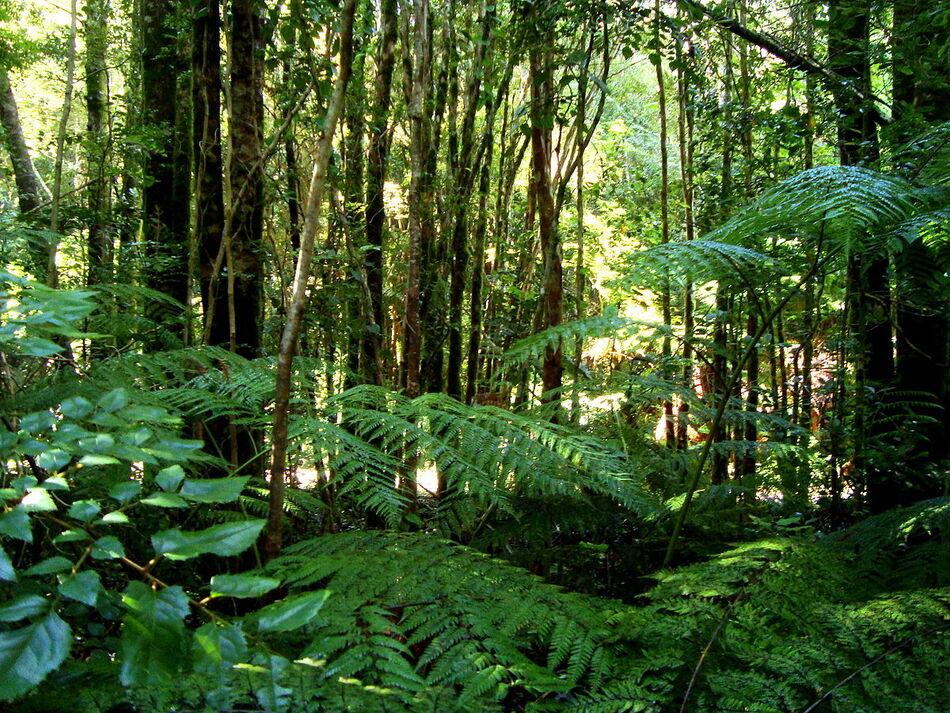 3. Temperate Rainforest of Valdivia