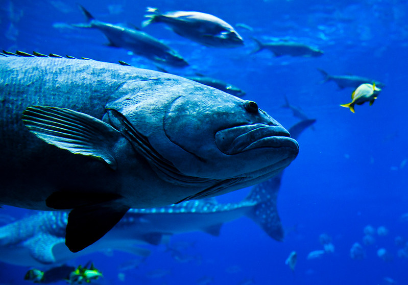 4. Georgia Aquarium