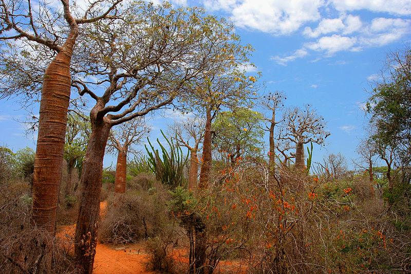 4. Thorny Forest, Madagascar
